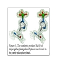 Phytase, enzyme phân giải phytate và tiềm năng ứng dụng công nghệ sinh học