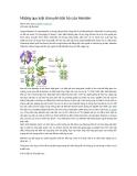 Những quy luật di truyền bất hủ của Menden