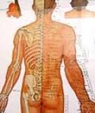 Thần kinh tọa đau (Tọa Cốt Thần Kinh Thống – Sciatique – Sciatica)