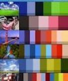 Sử dụng Color Scheme trong tổ chức sự kiện