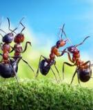 Andrey Pavlov: Chụp thế giới kiến thần tiên, mà kiến không chết!