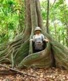 Vì sao nói rừng là vệ sĩ của loài người?