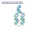 Chương IV. Sự tái bản DNA