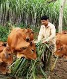 Coi trọng phát triển chăn nuôi theo hướng công nghiệp hoá, hiện đại hoá nông nghiệp nông thôn