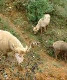 Hội chứng ngã nước trâu, bò, ngựa, hươu do ký sinh trùng đường máu (bệnh ký sinh trùng đường máu)