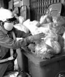 Các biện pháp giảm phát thải bao bì nilông khó phân hủy tại Việt Nam