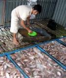 Các kỹ thuật nuôi cá Bống kèo thương phẩm