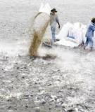 Qui trình ương giống và nuôi thương phẩm cá thác lác nâng cao hiệu quả kinh tế cho người nuôi