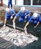 Các kỹ thuật nuôi cá Chình