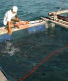 """Bình Thuận: Cá Chình, cá Bống tượng """"lên ngôi"""""""