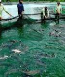 Giới Thiệu Về Cá Koi Nhật Bản.