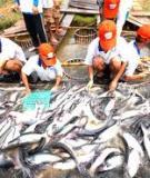 Các kỹ thuật nuôi cá lóc trong ao đất