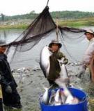 Mô hình sản xuất giống ,nuôi cá bống tượng công nghiệp