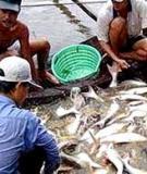 Trị bệnh cá bằng thuốc độc, môi trường bị hại