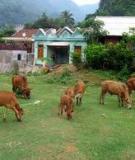 Bệnh cảm nắng ở trâu bò