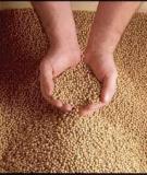 Các chất dinh dưỡng trong thức ăn chăn nuôi