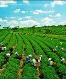Mối quan hệ giữa phát triển kinh tế và chất lượng môi trường