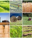 DRY-FARMING DEFINED