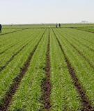 DRY-FARM SOILS