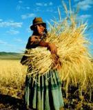 FARM DAIRYING