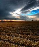 THE SOILORIGIN OF THE SOIL