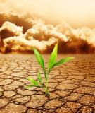 HYDROGEN, OXYGEN AND NITROGEN AND GROWTH