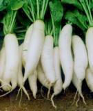 Kỹ thuật trồng củ cải