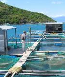 Phòng bệnh tổng hợp cho thủy sản nuôi trong mùa hè