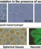 Three-dimensional tissue fabrication