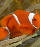 Tài liệu hướng dẫn làm bể cá cảnh biển Saltwateraquarium.