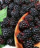 Top 9 thực phẩm chống oxy hóa