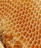 Giáo trình Kỹ thuật nuôi ong mật - NXB Nông Nghiệp