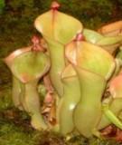 Bài giảng Hình thái giải phẩu thực vật