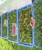 Thí nghiệm nuôi cấy mô và tế bào thực vật