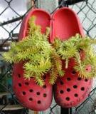 Lạ lẫm ý tưởng trồng cây trong những chiếc... giày