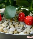 Tự tạo đồ trang trí cho vườn cây mini
