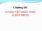 Chương III: VI SINH VẬT NHÂN THỰC (CHÂN HẠCH)