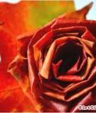Đẹp lạ hoa hồng làm từ lá cây tươi