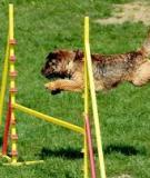 Dụng cụ tập thể thao cho thú cưng của bạn