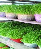 Cẩm nang trồng rau mầm