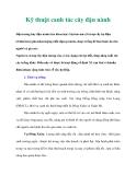 Tài liệu Kỹ thuật canh tác cây đậu nành