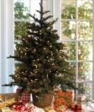 Làm cây thông Noel