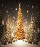 10 cách trang trí cây thông Noel thật