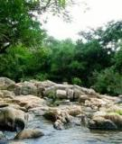 Tài nguyên sinh vật ở vườn quốc gia núi chúa tỉnh Ninh Thuận