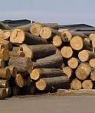 Tìm kiếm nguồn nguyên liệu, công nghệ mới cho ngành chế biến gỗ