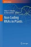 Non Coding RNAs in Plants