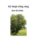 Kỹ thuật trồng rừng keo lá tràm