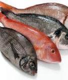 Những điều cần lưu ý khi cho bé ăn cá