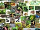 Đề tài: Sự phát triển phôi của lưỡng cư ( Amphibia  )