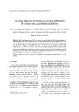"""Báo cáo """" Tạo dòng phân tử cDNA của gen mã hóa Gibberellin 20-oxidase từ cây arabidopsis thaliana """""""